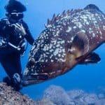 ספורט ופעילות ימית באיים האזוריים